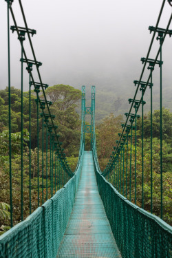 senerii:  Hanging bridge in the cloud forest (By Lewis Craik)