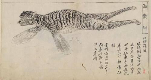 tokyo national museum Natural history drawing
