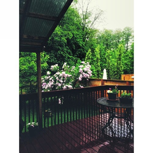 I love this backyard and these summer storms ☔🌸 #flowers #rain #storm #vscocam