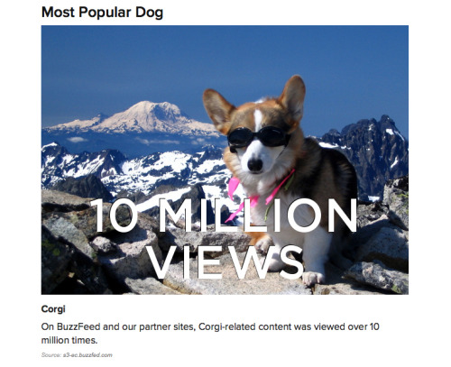 zoeythecorgi:  According to buzzfeed.com, Corgis are the MOST POPULAR DOG OF 2012!! WHOO! YOU LIKE ME! YOU REALLY LIKE ME!  WE WIN AT THE INTERNET!!!