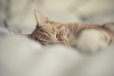 underthesamesofa:  Lazy Day (by Morphicx)