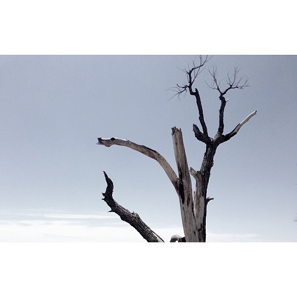 #deadwood #dead #trees #plains