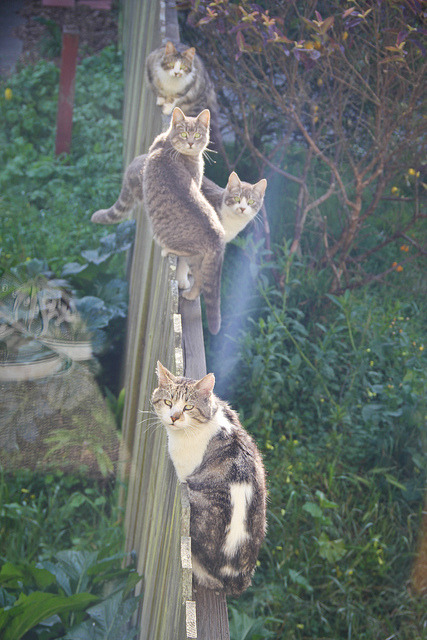 San Francisco Cats on Flickr by icatchfoxes (melissa olson). The other day my hard drive got filled to capacity while I was uploading photos Ander took at my birthday party. I have been spending my morning today scrubbing my computer of old files I forgot I downloaded, movies I've already watched and all things pointless. I came across this photo when I was cleaning out my folders of work from last year. This happened the morning after Nikk's Birthday party in the Lower Richmond part of San Francisco. I miss a lot these days [people, places, things, et al.], and I don't think that will change any time soon… surprisingly it feels really really cozy and I love being filled with all the memories of the beautiful days gone by.