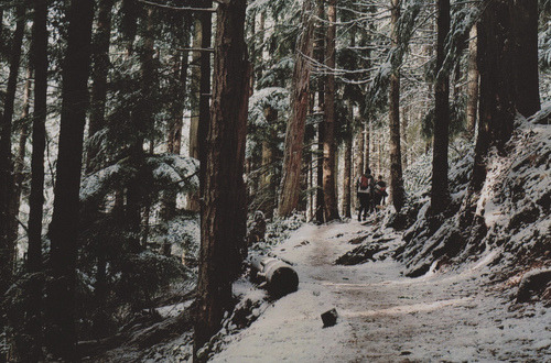 Winter walk | via Tumblr en We Heart It. http://weheartit.com/entry/73678884/via/katagali