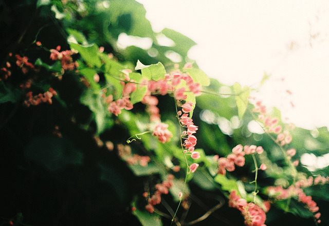 fiskarna:  tiny little pink hearts by Kasumi Angel on Flickr.