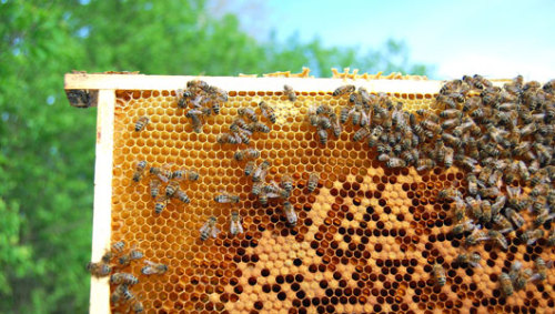 A bugophobe's guide to beekeeping When her curiosity and concern about Colony Collapse Disorder reached a peak, this writer put her deep, personal fear of bees aside. Sort of.