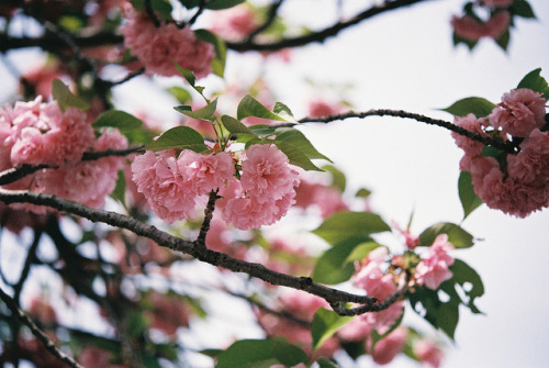 japanlove:  FH000011 by alexxis on Flickr.
