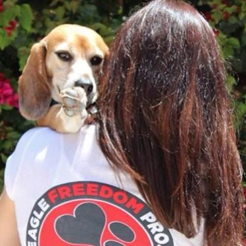cruetlyfree bogart beaglefreedomproject