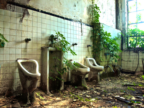 An abandoned Atlanta school's bathroom is slowly reclaimed by ivy and kudzu.  When humans leave, plants take over.