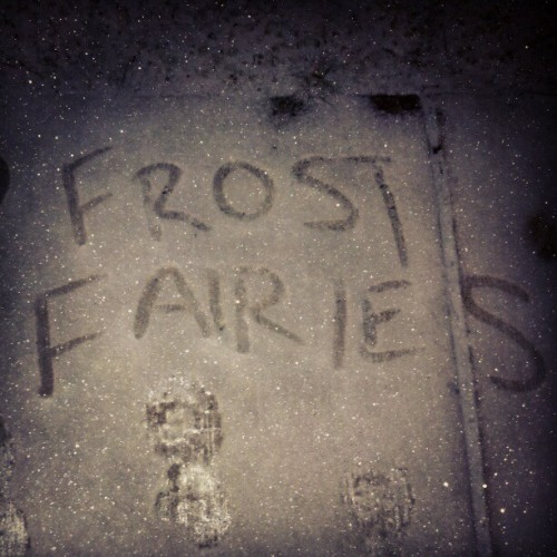 Found this on my walk home #winter #streetart #fairieswerehere