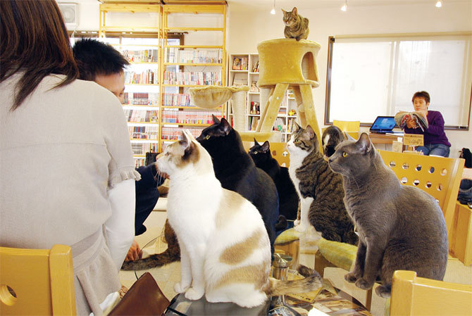 oldenough2burmom:  Someone please open a 'cat cafe' near my office like the ones they have in Japan. Visitors get to order coffee, tea and pastries and hang out with cats. Heaven.