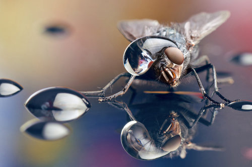 Mesmerizing photos of insects wearing hats of water