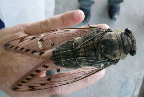 oh my god, i'm obsessed with HUGE insects!