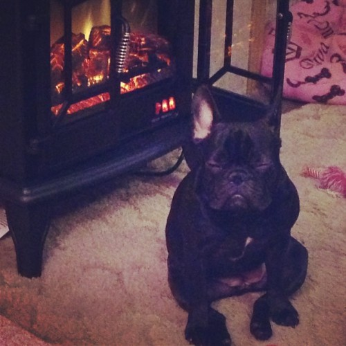 Hahaha!!! Yeah my baby loves her heat!! 🔥 #frenchie #bulldog #frenchbulldog