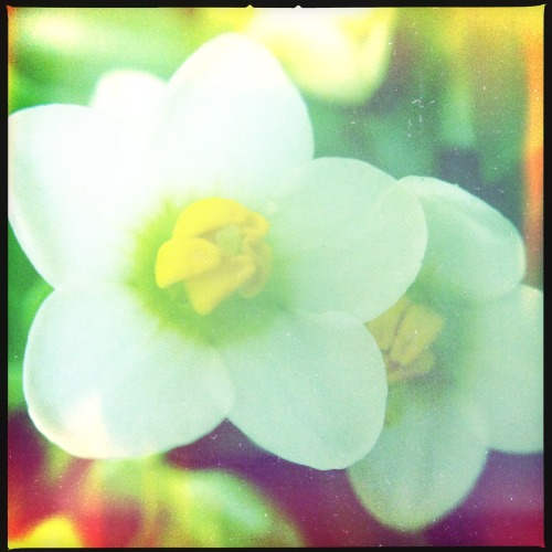 A touch of tenderness.~ #day5_touch #Hipstachallenge #MakeBeautiful #hipstaconnect #hipstagraphy