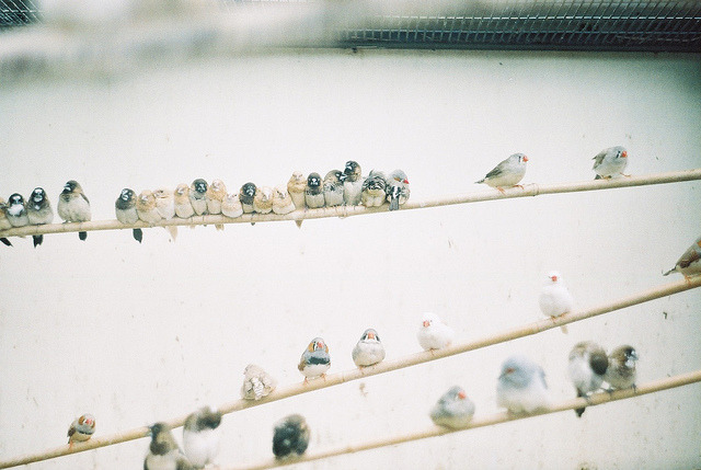 bird on a wire by mtaylorz11 on Flickr.