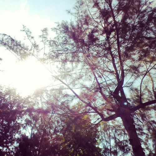 Morning sun #sun #sunshine #morning #trees