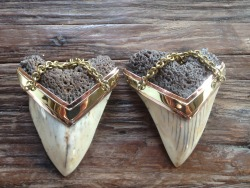 White Megalodon Teeth earweights by Jimmy Buddha Designs