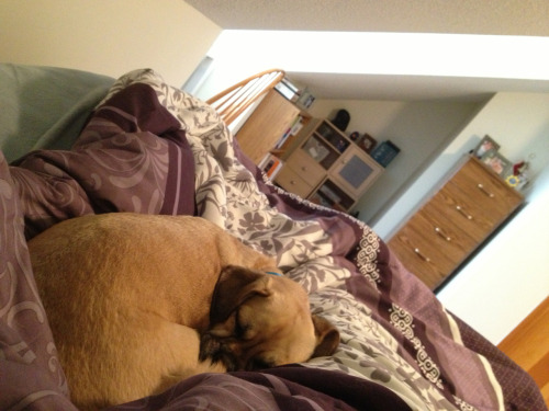 Helping me feel better. Cuddle puggle.