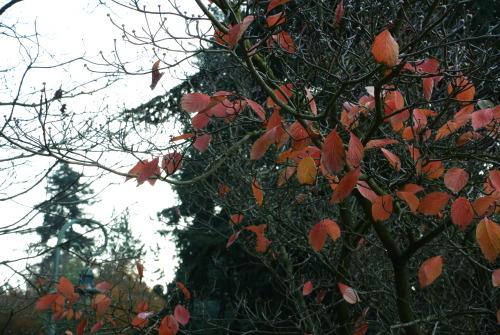yy a comme un air d automne