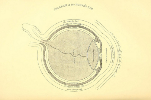 Diagram of the Horse's eye by BioDivLibrary on Flickr. Rural life described and illustrated, in the management of horses, dogs, cattle, sheep, pigs, poultry, etc. etc. :.London ;London Printing and Pub. Co.[between 1868 and 1888].biodiversitylibrary.org/page/20715503