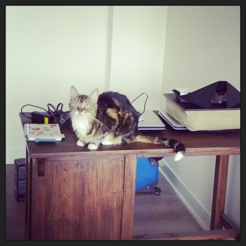 Minnow atop the new desk.