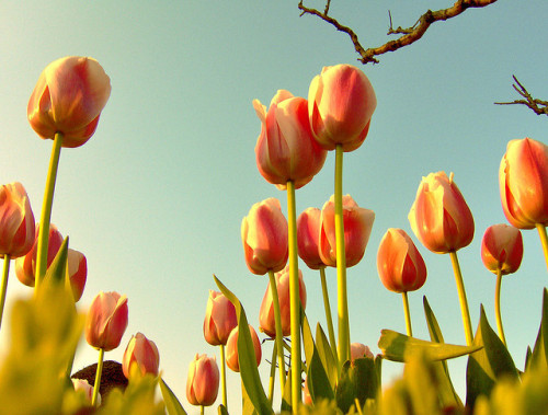 Tulip Era in the Ottoman Empire… by Kıvanç Niş on Flickr.