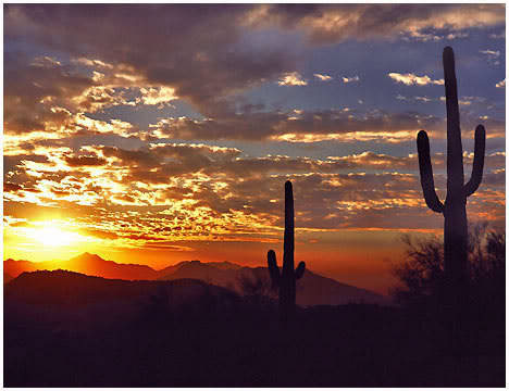 harvestheart:  another great Arizona sunset - the classic with saguaros silhouetted
