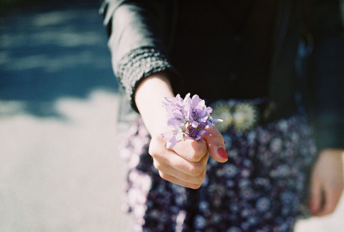 sinkling:  picking flowers by Liis Klammer on Flickr.