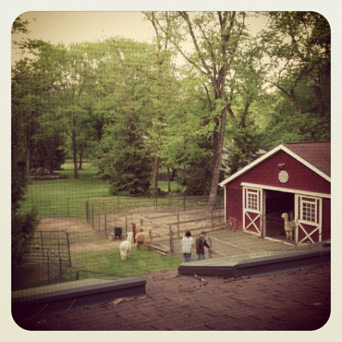 View from our studio #alpaca #farm #burbs #freshair