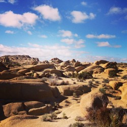 Good morning, Joshua Tree.  (at Jumbo Rocks Campground)