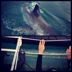 Yes that is a #GreatWhite and yes those are MY hands!! #SharkCageDiving #capetown #southafrica #coerced #iSurvived