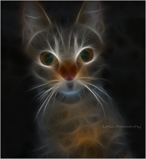 lastdaysofmagic:  Fractal Cat