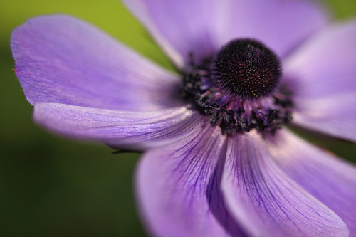 Curves Of Purple by AnyMotion on Flickr.
