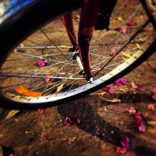 #bici #bike #bicycle #bicicleta #ride #whell #rim #flower #camelina #shadow