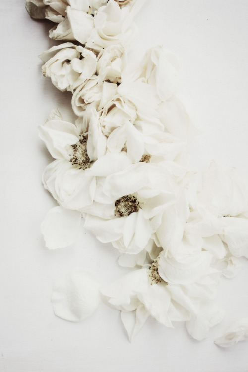 vacants:  ROSES NO.02 (by LoveMissB)