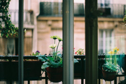 disporum:  anytime now by isabelle bertolini on Flickr.