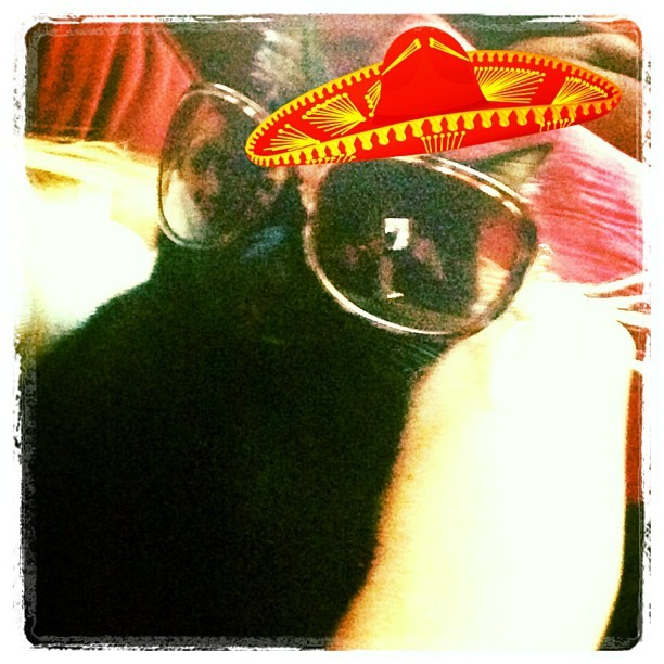 Happy Cinco de Gato! 😼 #cincodemayo #coolcat #catsofinstagram #catoftheday #chillin #sombrerostatus #deemonthecat