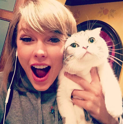 cats kitty purry purr hello kitty cats of tumblr cats of the internet taylor swift katy perry ian somerhalder dominic sherwood alberto rosende kesha macklemore eva longoria james franco the big bang theory
