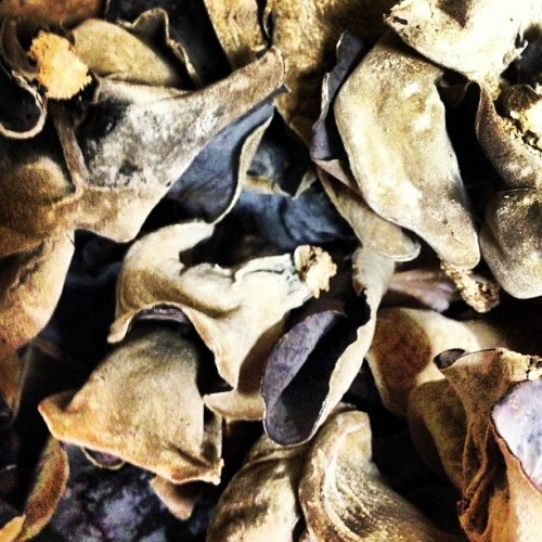 Dried #blackmushroom from #vietnam