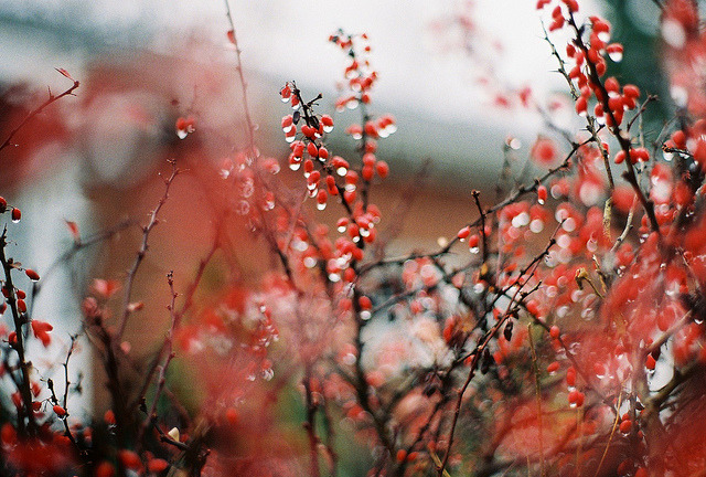 untitled by inaminorchord on Flickr.