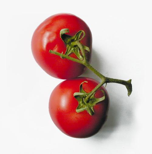 "Flamous Fun Fact: Tomatoes have many healthy benefits like lowering cholesterol, balancing blood sugar, strengthening bones, hair, and skin, high antioxidant levels, and reducing the chances of prostate cancer. Maybe the classic saying should be changed to: ""A tomato a day keeps the doctor away."""