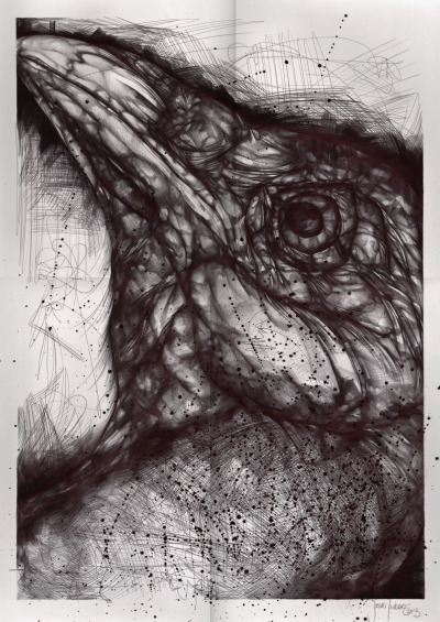 lefthanddraws:  large raven portrait done in ballpoint & calligraphy pen