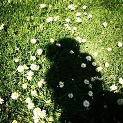 Daisy picking // top-knot on a thursday. #spring #flowerchild #daisy #shadow #hair #topknot #artsy #contrast #girl #thursday #fblogger (at Secret Garden)