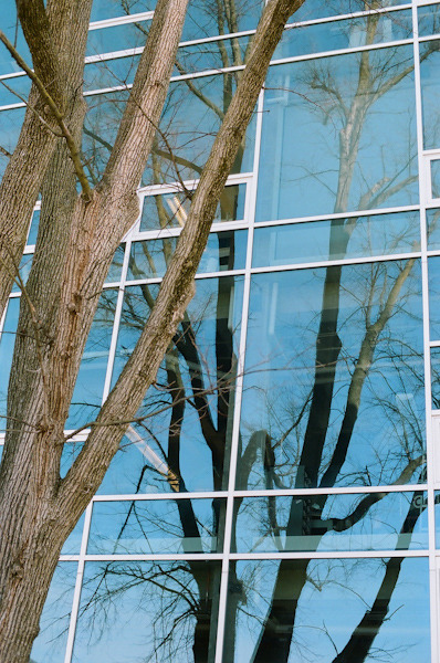 ninaperlman:  Branches in Blue Windows, Columbus OH, March 2013
