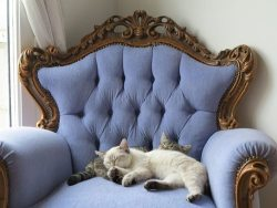 cat vintage cats blue antique vintage furniture country chic cats sleeping cats snuggling vintage chair