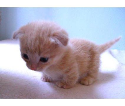 adorable kittens - Google Search en We Heart It. http://weheartit.com/entry/52856390/via/Lifeisjustamazing