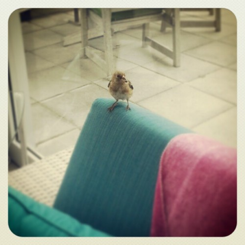 Just a little bird, chilling inside on a couch / on Instagram http://instagr.am/p/WdgS1QMHPS/
