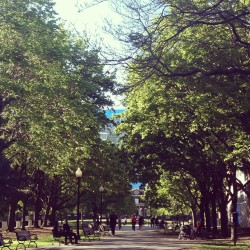 May 16 #photoaday #thegrange #park #toronto #sunny #summer #trees