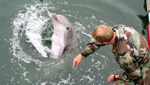 Dolphins: Unexpected treasure hunters The U.S. Navy Marine Mammal Program combines technology and biology to train bottlenose dolphins to find sea mines, enemy divers and even artifacts.